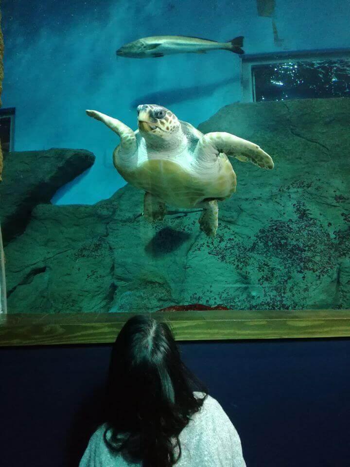 el acuario de sevilla